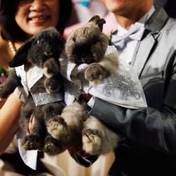 09-animal-weddings-200711