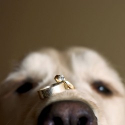 19-dog-with-wedding-rings-jeff-cooke-photography