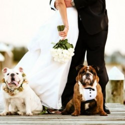 special-guests-dogs-in-wedding7-in-wedding-dresses